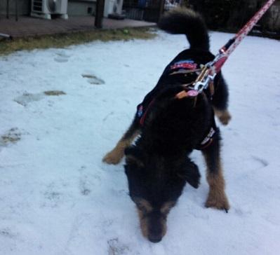 ムック雪1
