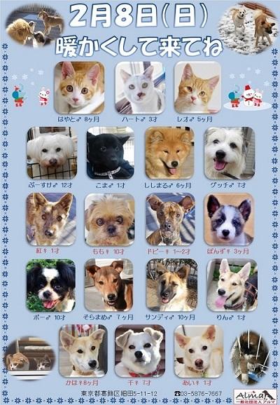 2月8日参加犬猫