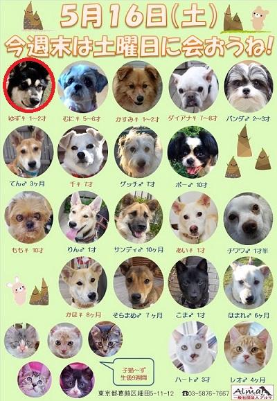 ALMA ティアハイム 5月16日 参加犬猫一覧