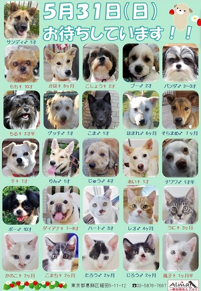 ALMA ティアハイム 5月31日 参加犬猫一覧