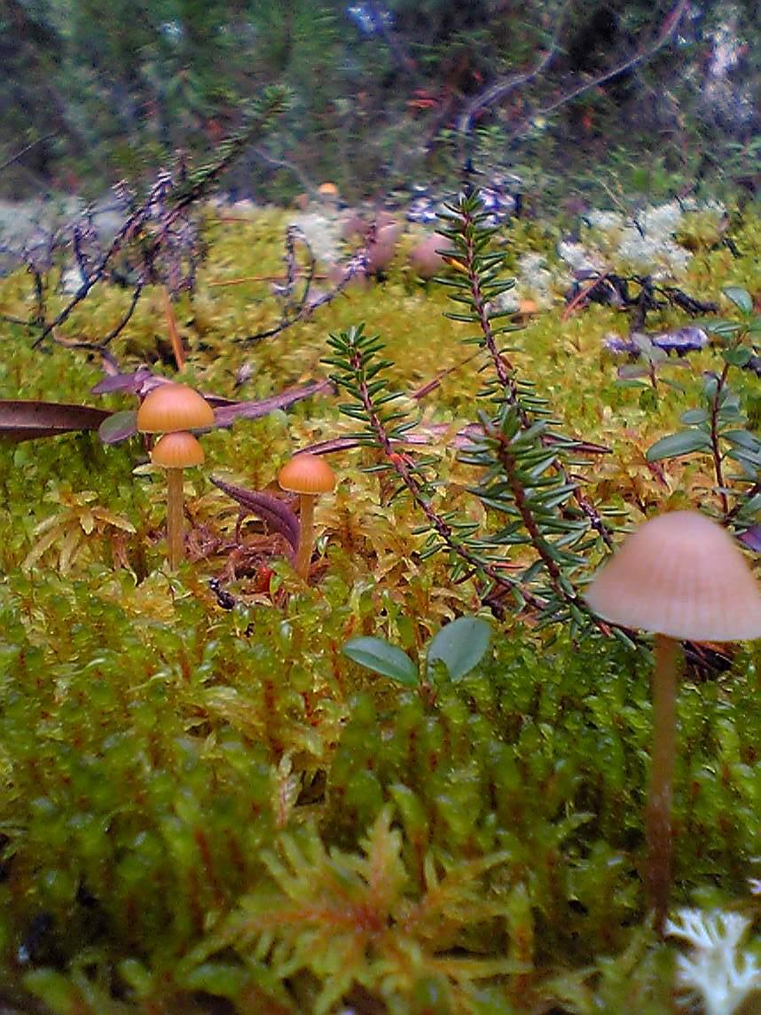 6.ユーコンの森の苔むした地面