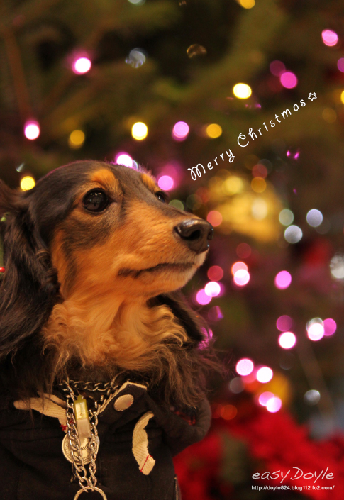 2014_クリスマス
