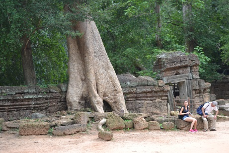 巨木と観光客