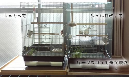 新居にドキドキ同居- 1