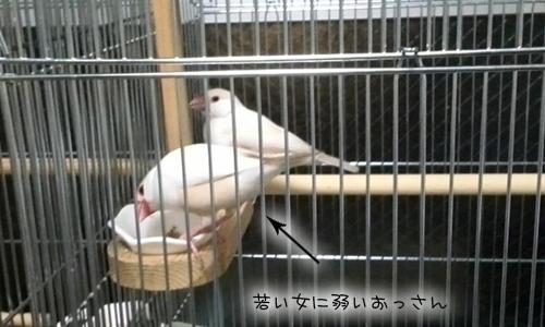 新居にドキドキ同居- 3