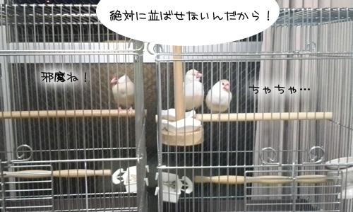 新居にドキドキ同居- 5