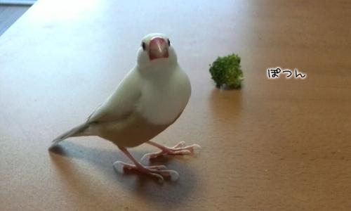 ブロッコリーと枝豆の人気度_3
