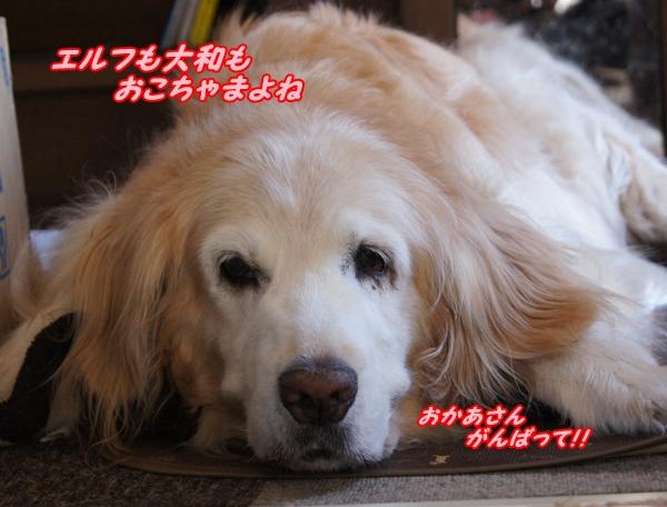 2015-7おかあさんがんばって!