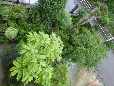 上から見る庭① 2015 6・17