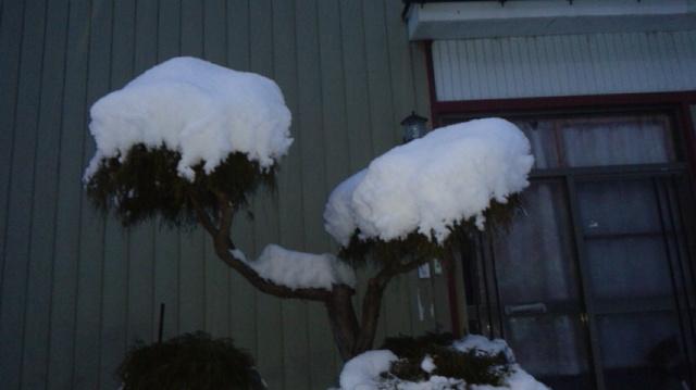 1.31積雪