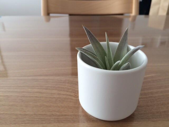 エアープランツおまかせ3種セット 薫る花 イオナンタ ハリシー カプトメデューサ 無印良品 瀬戸焼の鉢