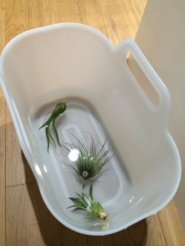エアープランツ ソーキング 水やり 無印良品 柔らかい掃除用品収納ボックス バケツ