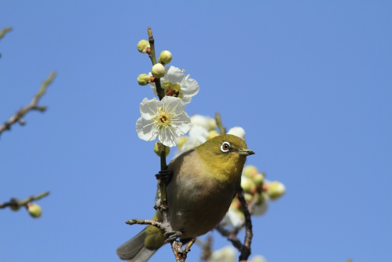 山田池、春、1