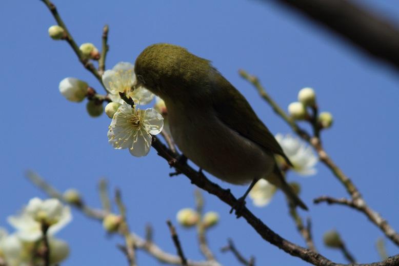 山田池、春、2