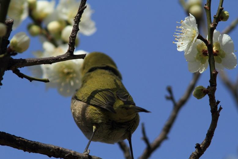 山田池、春、3