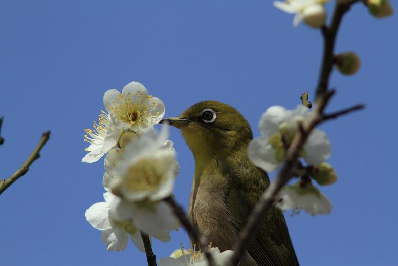 山田池、春、5