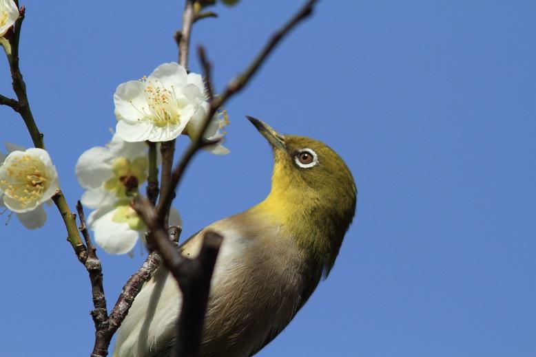 山田池、春、6