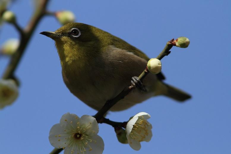 山田池、春、7