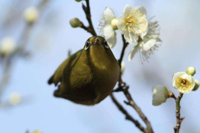 山田池、春、9