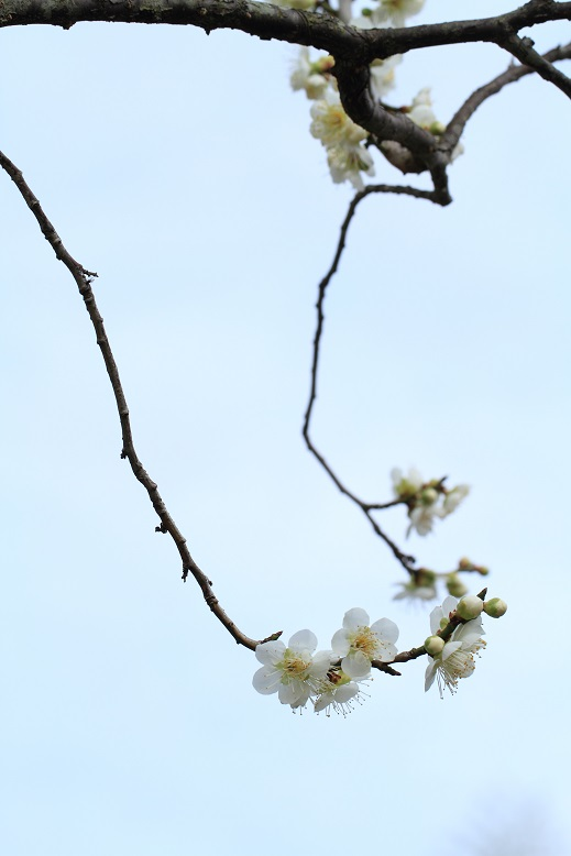山田池、春、24