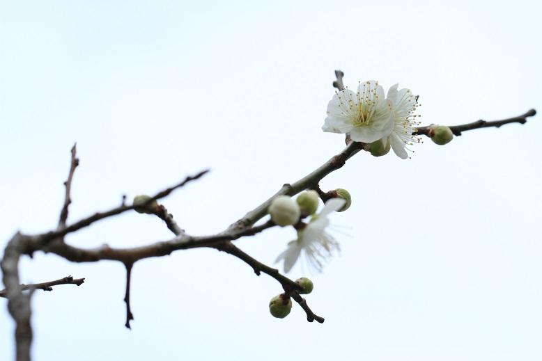山田池、春、25