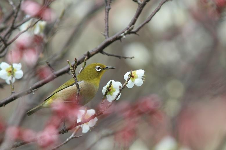 山田池、春、50