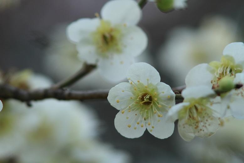 山田池、春、52