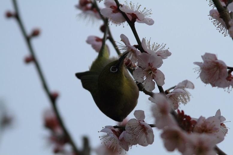 山田池、春、55