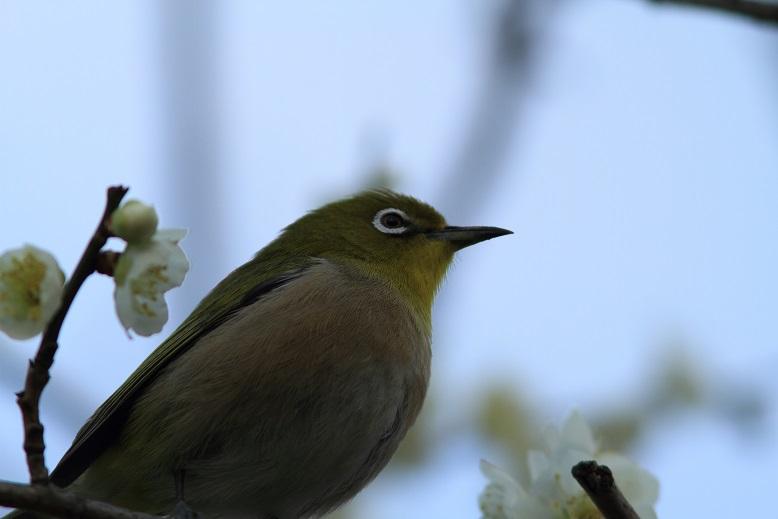山田池、春、56