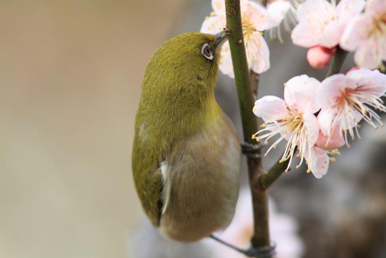山田池、春、58