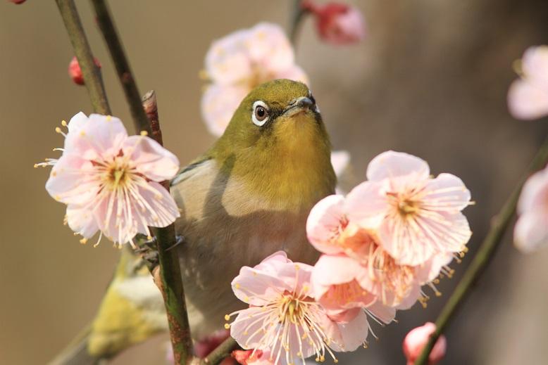 山田池、春、59