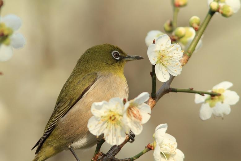 山田池、春、65
