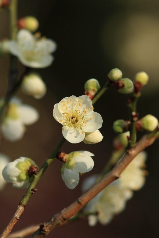 山田池、春、66