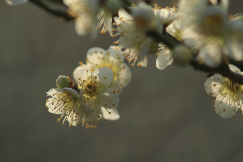 山田池、春、67