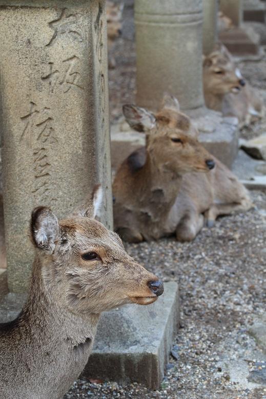 奈良公園、8