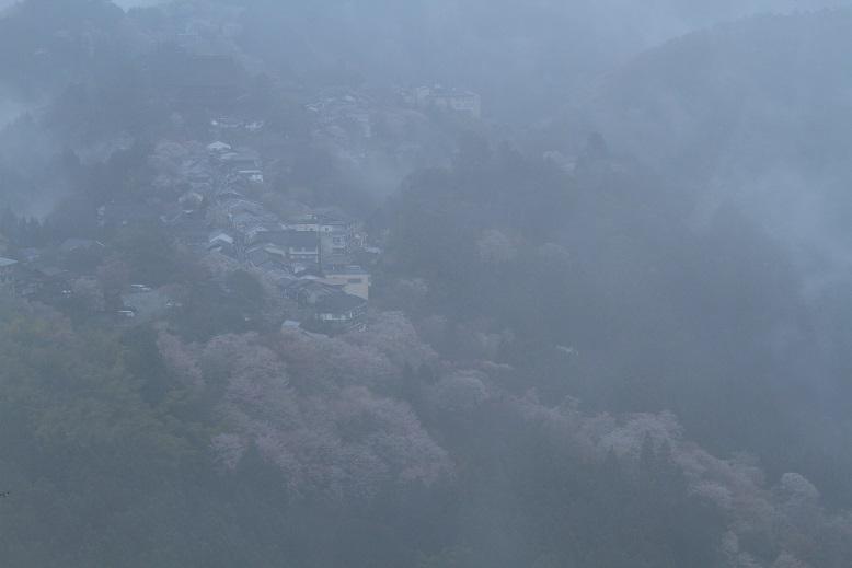 吉野桜、2