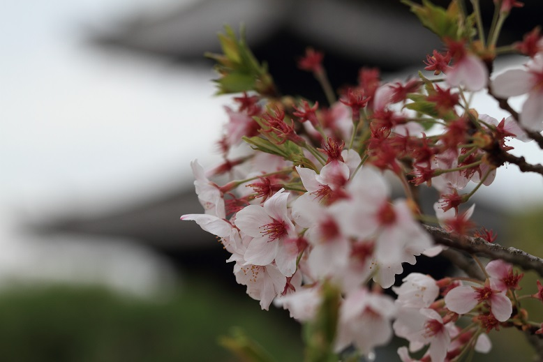 叡福寺、1