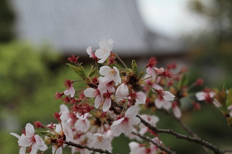 叡福寺、2