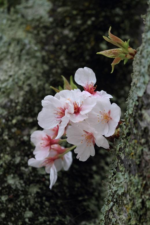 叡福寺、5