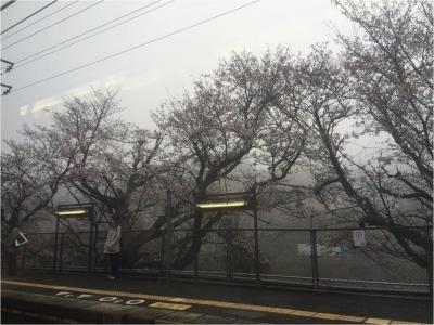 桜270330_01