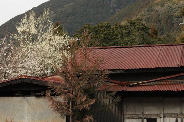 150221-ohigawa-213.jpg