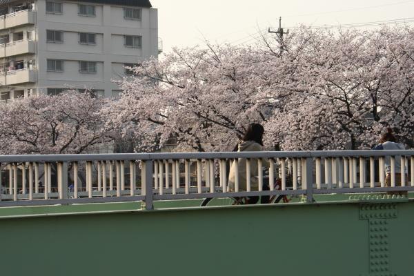 150331-kana-12.jpg