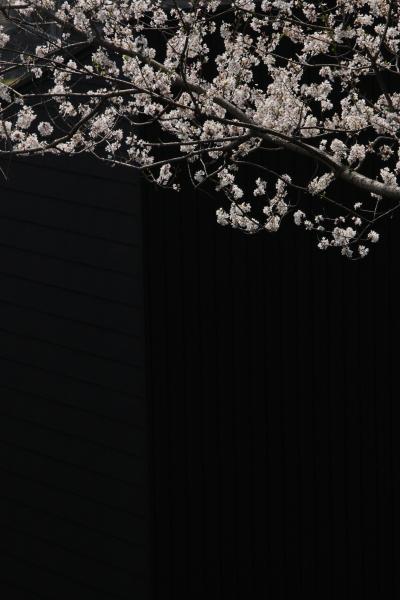 150331-kiso-07.jpg