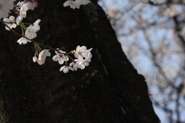 150331-kiso-26.jpg