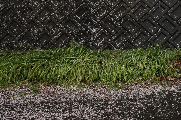150405-rain-10.jpg