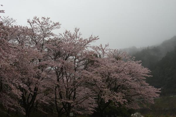 150405-rain-11.jpg