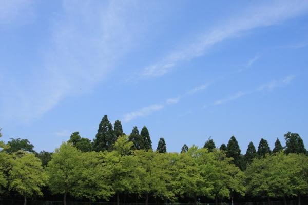 150711-shin-01.jpg