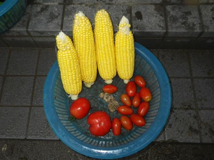 収穫2_15_07_03