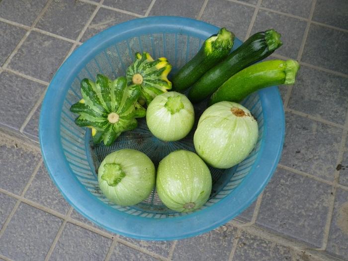収穫2_15_07_04