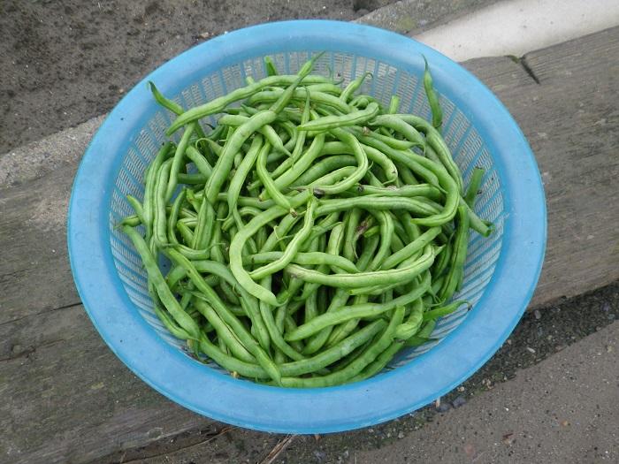 収穫6_15_07_05